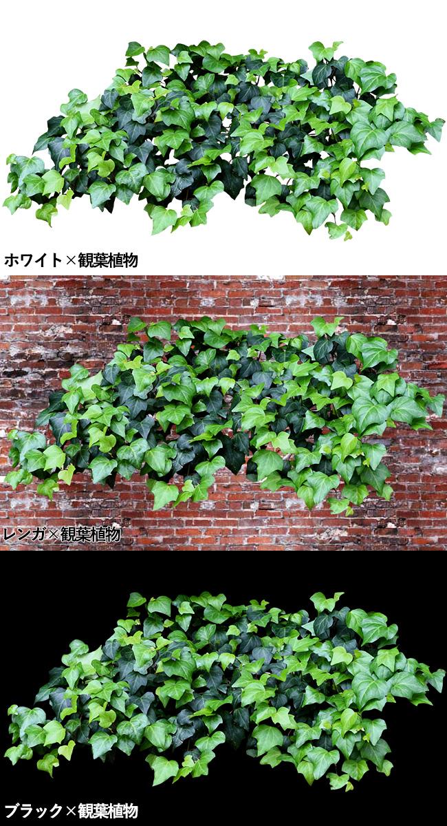 3種類の壁と観葉植物