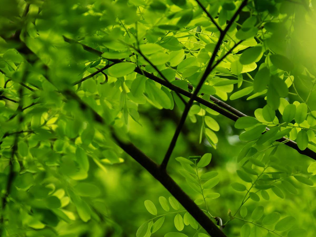 木と葉っぱ